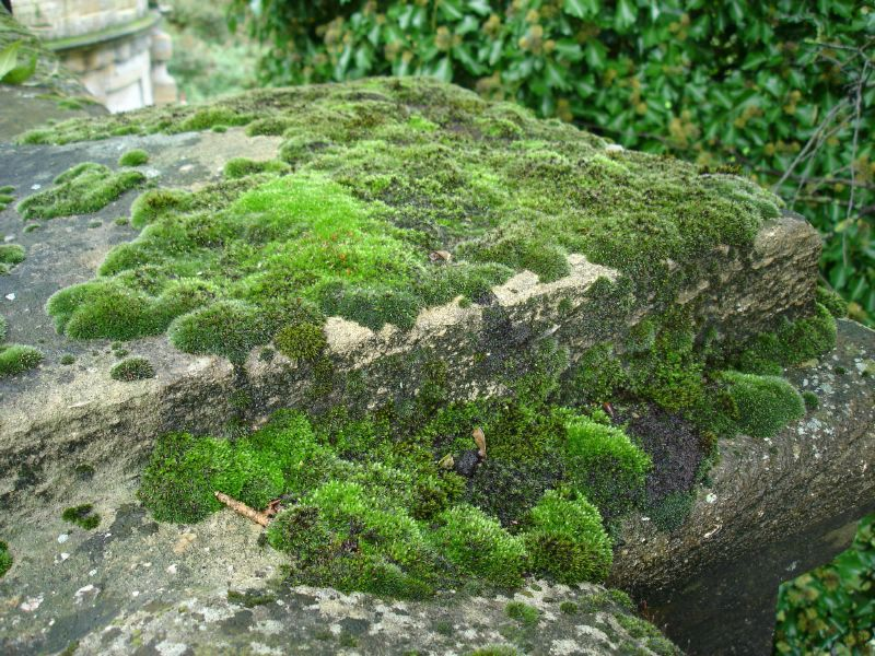 When we were crossing the bridge again, I got an idea to take a picture of it's mossy stones. It really doesn't look like a bridge.